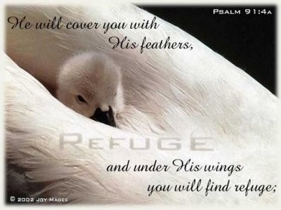 in_the_shelter_of_his_wings