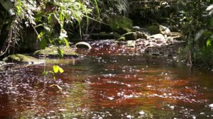 stock-footage-a-tannin-stained-red-water-creek-running-through-the-mountains-in-the-rainforest-of-ecuador